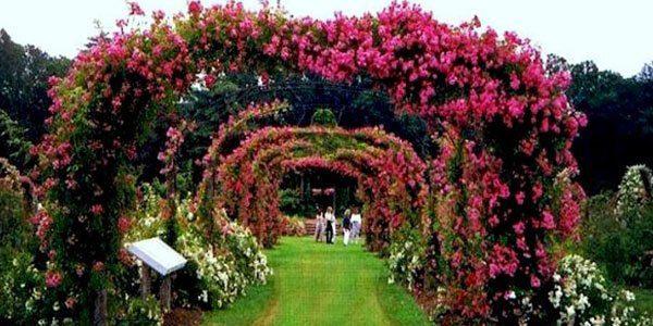 ROSE GARDEN - Best places to visit in Chandigarh